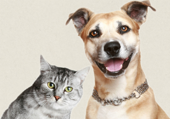 Pet Transport Online Quote Christchurch Katz N K9z Ltd